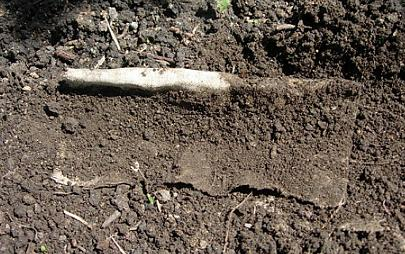 как сажать тыкву семенами