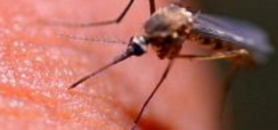 Кого кусают комары