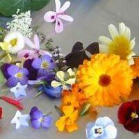 Съедобные цветы у вас в саду