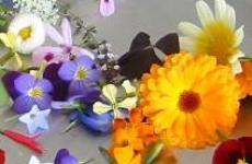 Съедобные цветы у вас в саду.