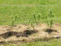 Что такое мульчирование почвы