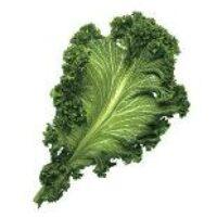 Полезные свойства листовой горчицы
