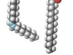 Омега-3 жирные кислоты в нашем питании