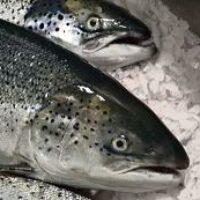 Польза лосося или рыбный день