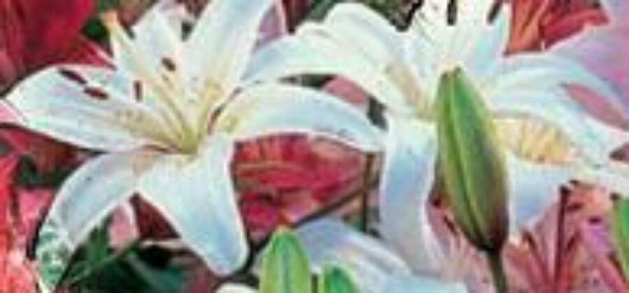 Луковичные цветы в саду