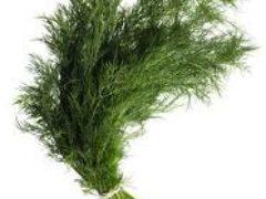 Как замораживать зелень на зиму