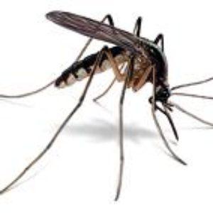 Интересные факты о комарах.