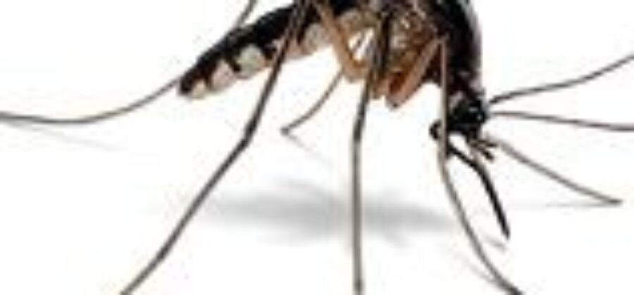 Интересные факты о комарах