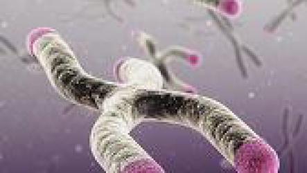 Как замедлить старение организма?