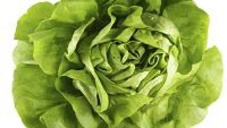 Польза зеленого салата, молодо-зелено.