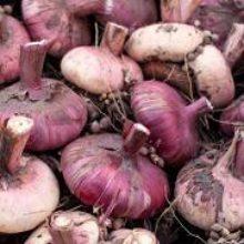 Как сохранить луковицы гладиолусов до весны