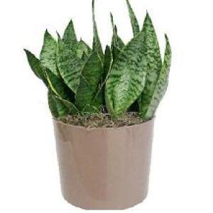 Неприхотливые комнатные растения.