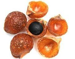 плоды мыльного дерева