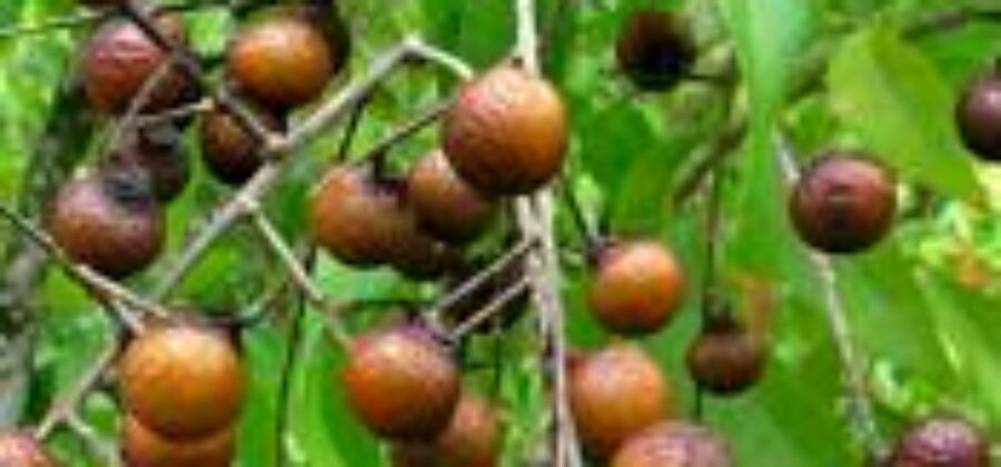 Шампунь из мыльных орехов— древние традиции и современные знания