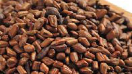 Что такое китайские кофейные бобы?