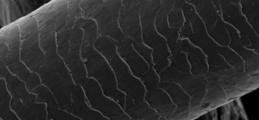 Поврежденные волосы под микроскопом— нервным лучше не смотреть