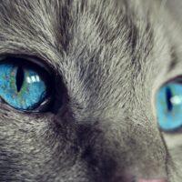 Статуэтка кошки в доме обладает магическим смыслом