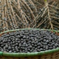 Модные ягоды асаи из солнечной Бразилии, вкусно и полезно