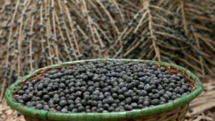 Модные ягоды асаи из солнечной Бразилии, вкусно и полезно.
