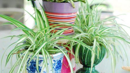 Полезные комнатные растения как естественный способ очищения воздуха.
