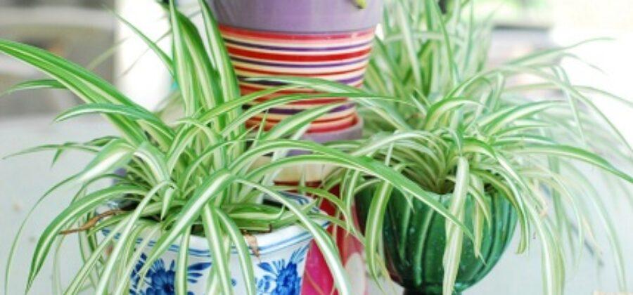 Полезные комнатные растения как естественный способ очищения воздуха