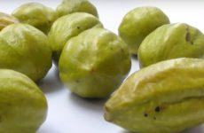 Что такое Харитаки?  Волшебный индийский орех.