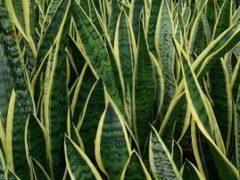Лучшие растения для спальни  выделяют кислород 24 часа в сутки