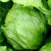 Почему салат Айсберг такой сочный и хрустящий?