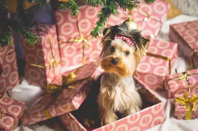 Как-упаковать-подарок