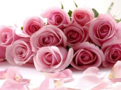 Розовые розы-символ нежной любви и благодарности