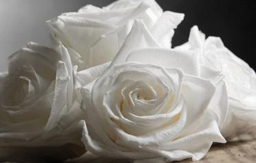 что значат белые розы