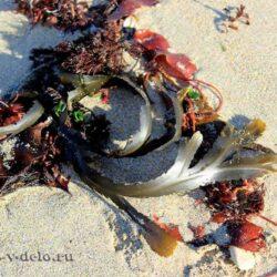 Маска из семян морских водорослей-ваша кожа будет выглядеть молодой и сияющей