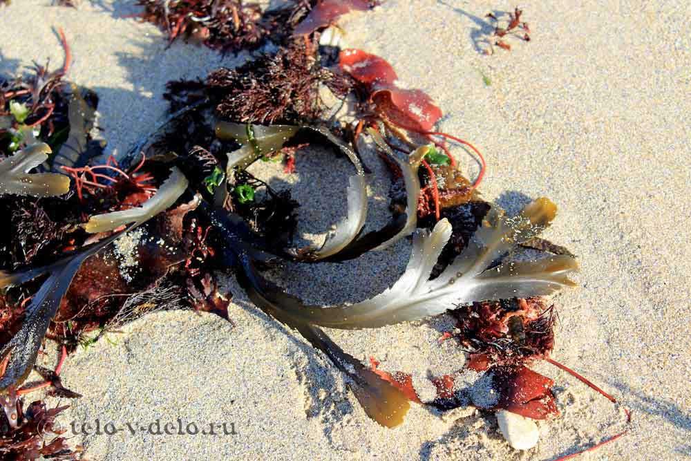morskie vodorosli