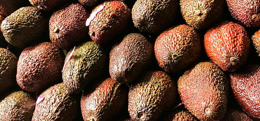 Как растет авокадо в природе— страны, где растет авокадо на карте
